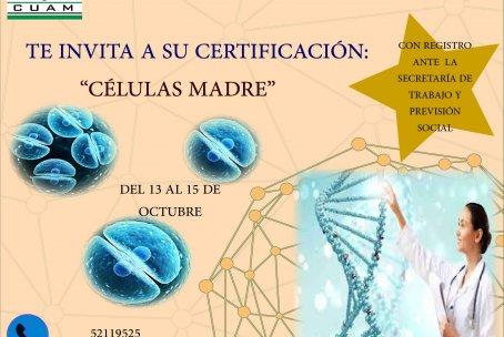 CERTIFICACIÓN DE APLICACIÓN DE CÉLULAS MADRES